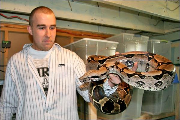 Des photos de tout mes serpents Bccfemelle03