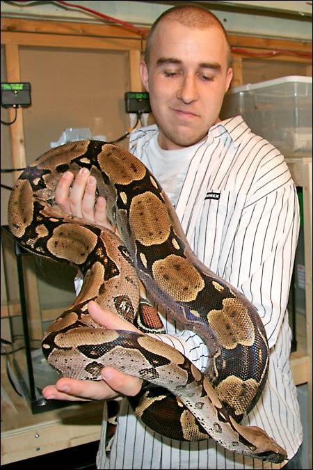 Des photos de tout mes serpents Bccfemelle04