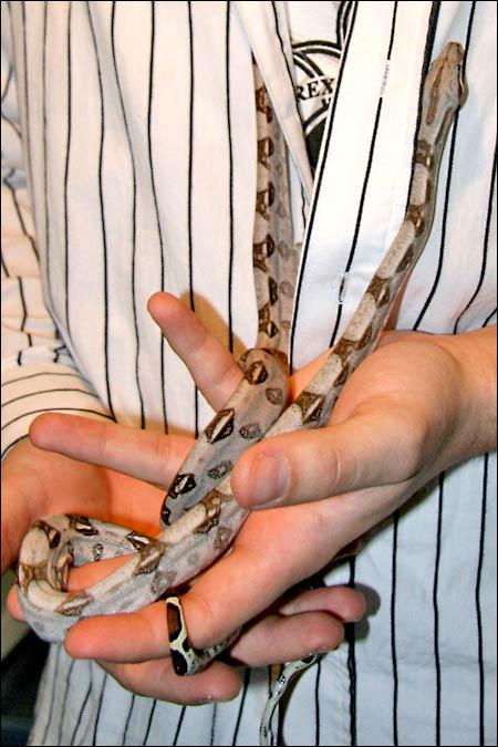Des photos de tout mes serpents Bcicouple03
