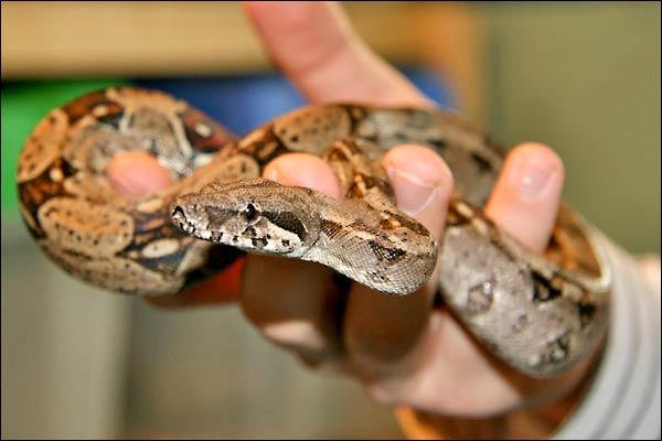 Des photos de tout mes serpents Bcisale01