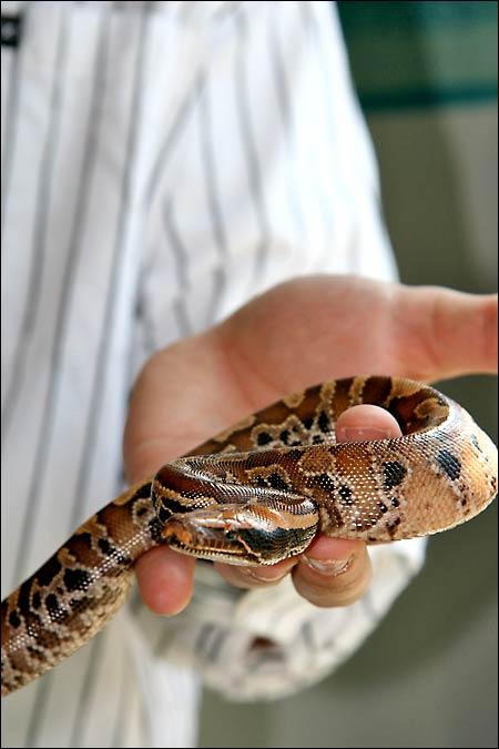 Des photos de tout mes serpents Blood02