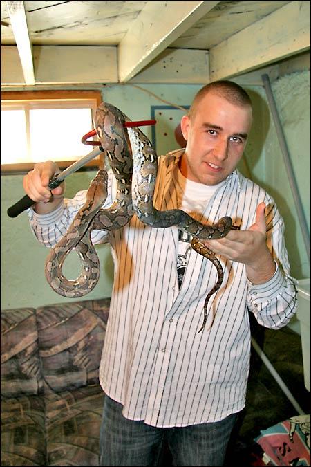 Des photos de tout mes serpents Retic01